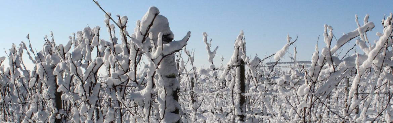 Estimez l'impact du gel sur vos vignes avec la cartographie par drone Scanopy